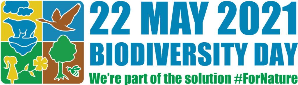 idb-2021-logo-en-web.png