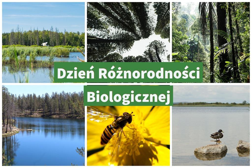 Dzien_roznorodnosci_biologicznej.jpeg